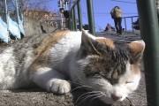 「谷中のら猫ラプソディー」、定期上映始まる-毎月ニャンニャンの日に