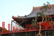 清水観音堂に「月の松」復活-新たな観光名所に期待