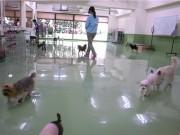 鶯谷に犬のしつけ教室-カフェ、犬用ホテルも併設