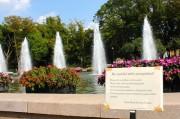 上野公園でデング熱感染の可能性-台東区が調査、「ウイルス検出されず」