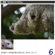 上野公園で「珍樹アニマル」イベント 動物に見える樹木を探す