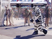 上野動物園で「猛獣脱出対策訓練」 シマウマの脱出事故を想定