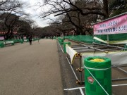 上野公園で花見の準備進む オオカンザクラは既に見頃に