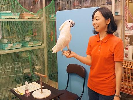 上野のインコ・オウム専門店、「鳥カフェ」開設 お茶飲みながら鳥と触れ合い