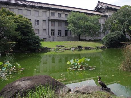 東京国立博物館で庭園開放始まる ドラマにも使われた歴史的文化財を間近に