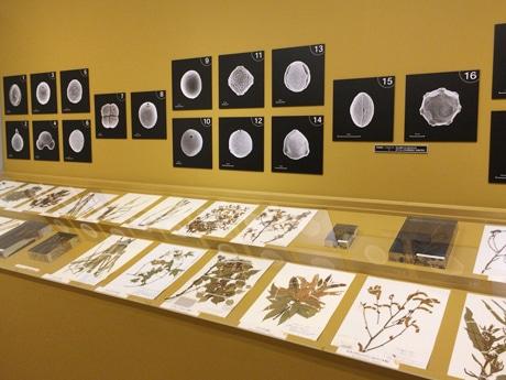 上野で花粉と花粉症の科学展 無花粉品種開発やドローンによる測定など最新技術紹介も
