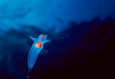 知床は、陸上の生態系と流氷の影響を受けた海洋生態系からなる独特の生態系が評価され、2005年に自然遺産に登録された。