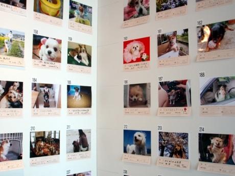 アクティ大阪27階北展望ロビーに展示中の写真パネル