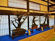 大阪天満宮で「てんま天神梅まつり」始まる 梅酒試飲の催しも