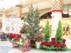 生花と自然木を使いクリスマスデコレーション-ディアモール大阪