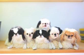 ルクア大阪で「鼻ぺちゃ犬」写真展 大阪は4年ぶりの開催