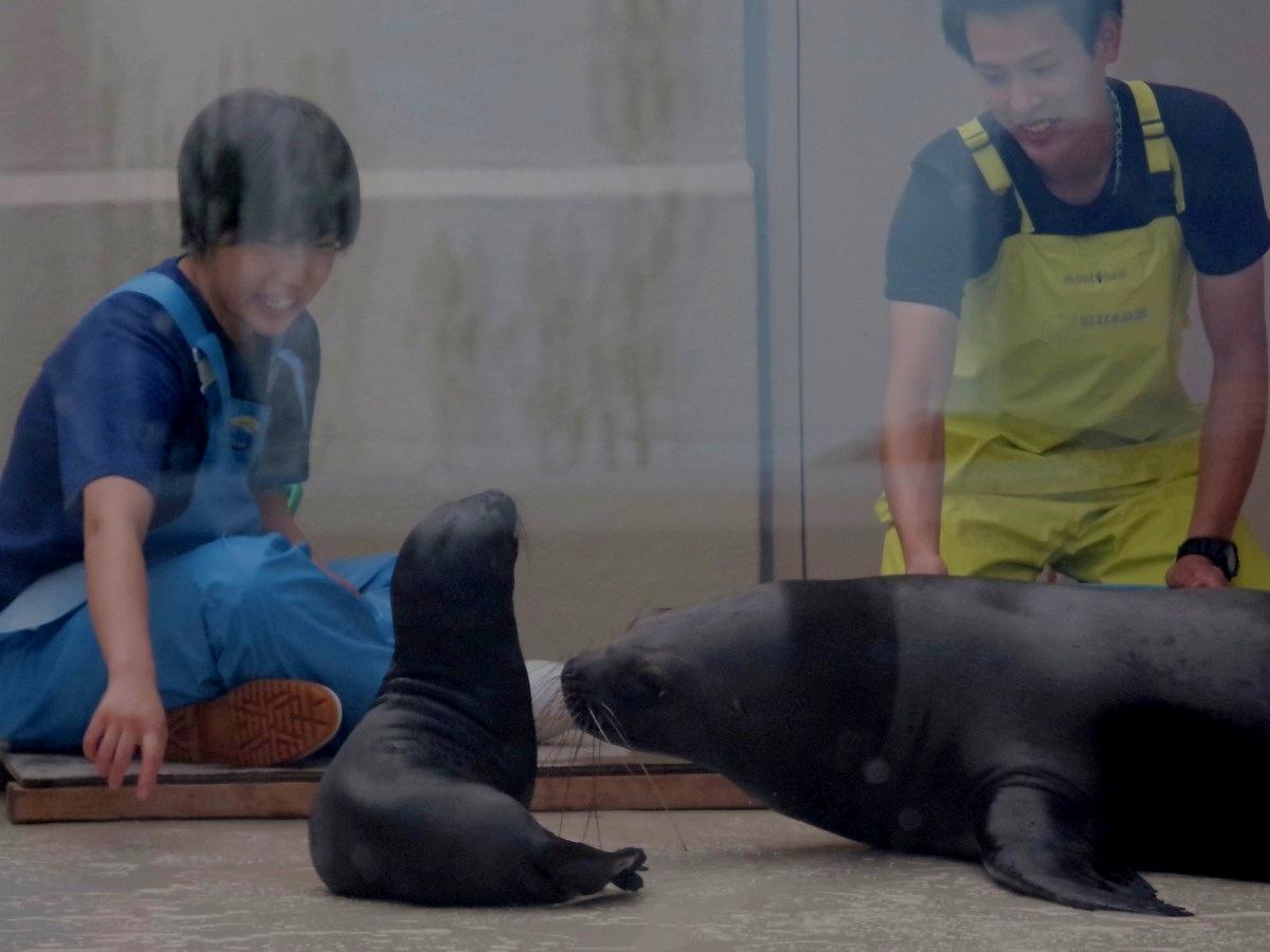 伊勢志摩の水族館、コロナ禍で動物の赤ちゃん誕生 飼育員のやりがいに(撮影=岩咲滋雨)