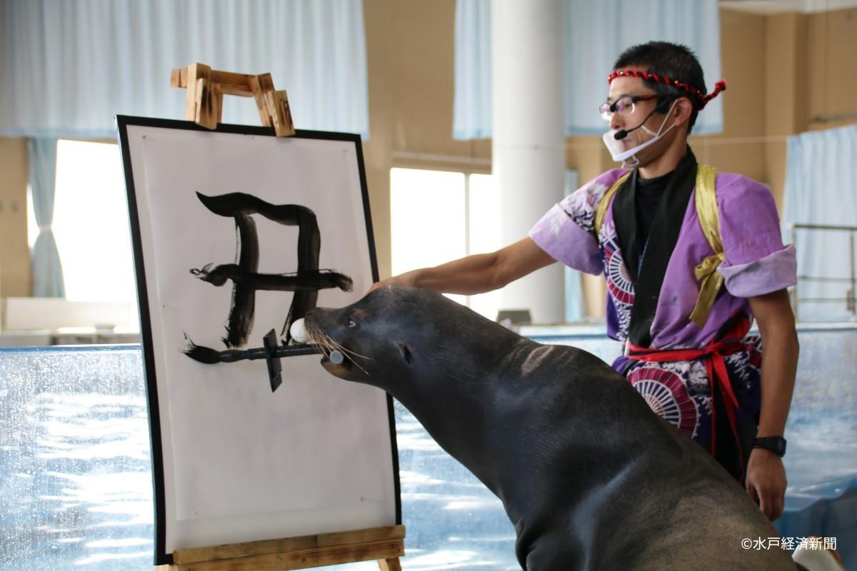 報道陣向けの書き初め練習会で今年の漢字一文字に選ばれた「丑」を書くアシカのゴエモン