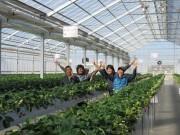 浦和の障がい者支援施設の農園でイチゴ狩り シイタケ販売も