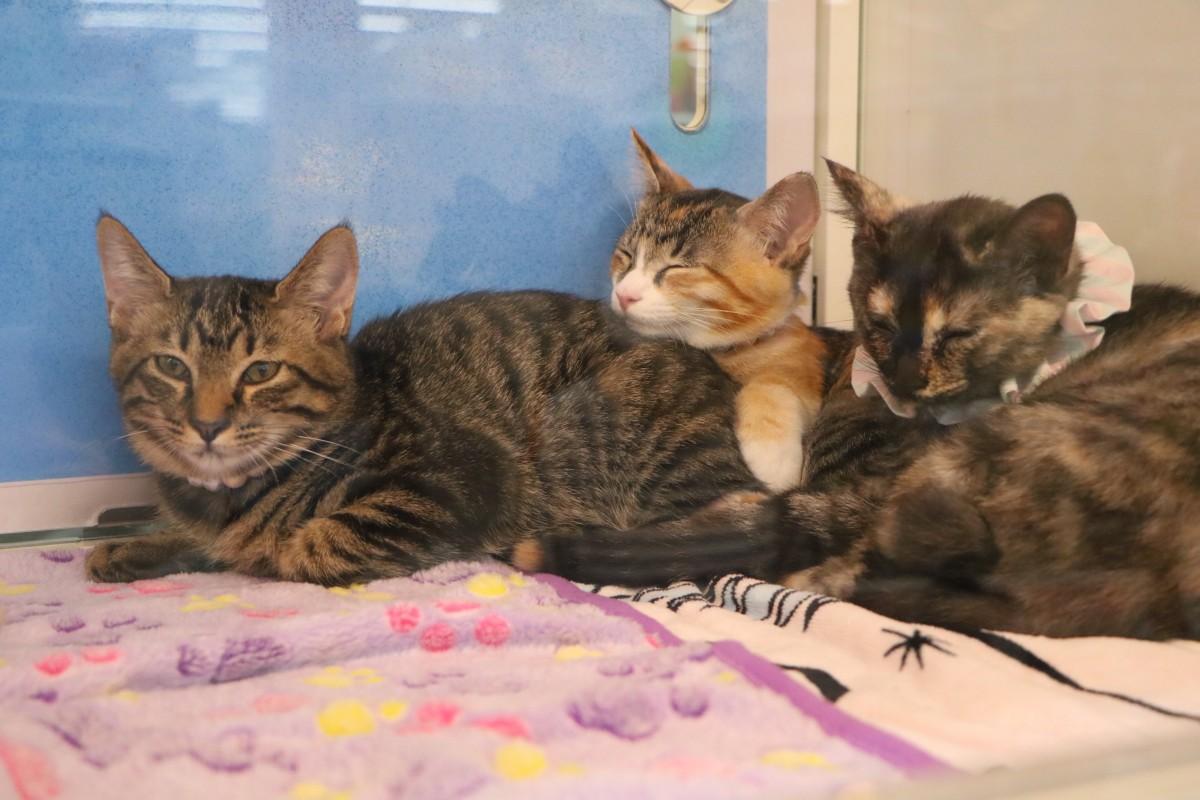 譲渡会に参加した保護猫たち