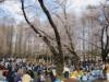 調神社や別所沼公園など浦和の名所 桜の花見客でにぎわう