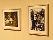 「うつのみや妖精ミュージアム」が7周年-「ネガ」展示をリニューアル