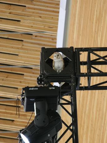 オーバル内に迷い込んだフクロウ。思わぬ珍客を見つけて即座に撮影したのは宮部保範(やすのり)さん(スピードスケート1,000メートル元世界記録保持者で、アルベールビル、リレハンメル五輪に2大会連続出場)。