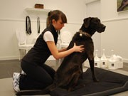 バンクーバーに犬用スパ「ペット・ショップ・ボーイズ」-レイキやサイキック療法も