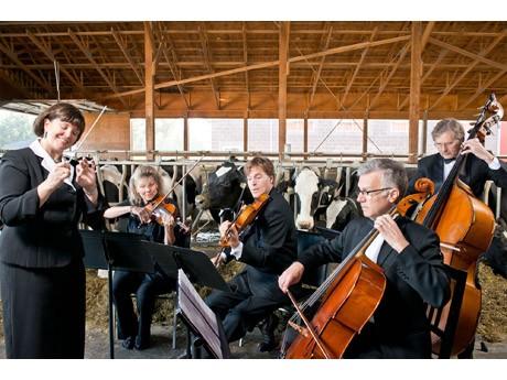 BC州で乳牛たちの生産量増加のための音楽コンテストが実施されている
