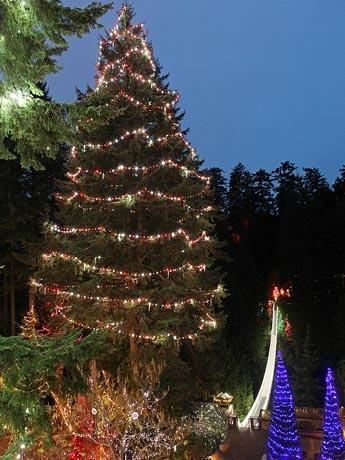 世界一高い46.4メートルの生木クリスマスツリーが登場 写真提供Capilano Suspension Bridge Park