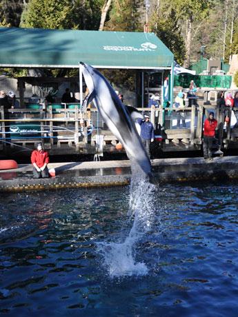 バンクーバー水族館は8月27日、「館内繁殖禁止」などを含む規制案見直しを求め、バンクーバー・パークボード(公園管理局)を提訴した