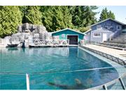 バンクーバー水族館にトドの新施設 元ベルーガプールを利用