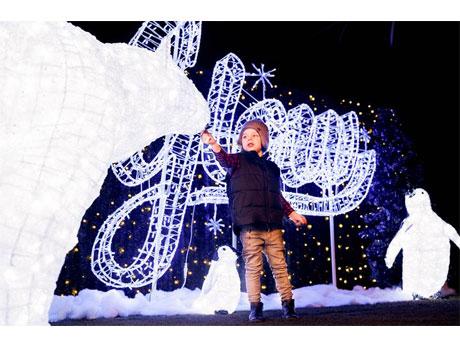 屋内型クリスマスイルミの庭園「Glow Christmas」(写真提供=Glow Christmas)