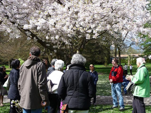 (Photo=Vancouver Cherry Blossom Festival)