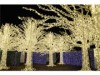 バンクーバーにクリスマスイルミ迷路 8万5千個のLEDで彩る