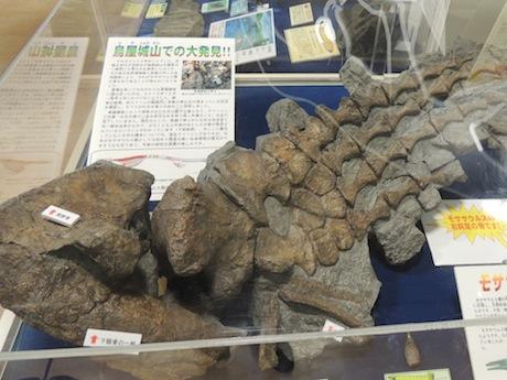 鳥屋城山から発掘されたモササウルス類の右前足