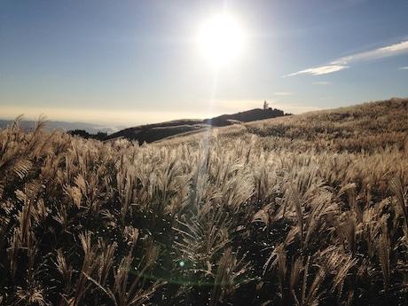 夕日に輝く生石高原のススキ大草原 幻想的な風景が広がる