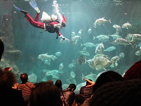 サンタ衣装で泳ぐ職員