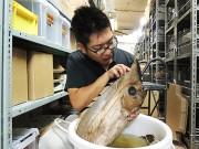 和歌山県立自然博物館で「興味津々!深海魚」展 標本180点、研究の振り返りも