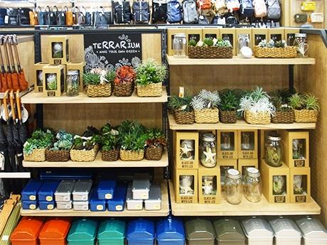 観葉植物や雑貨が並ぶ店内の様子