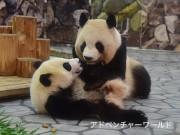 和歌山・アドベンチャーワールドでパンダの誕生日企画 「結浜」が1歳に