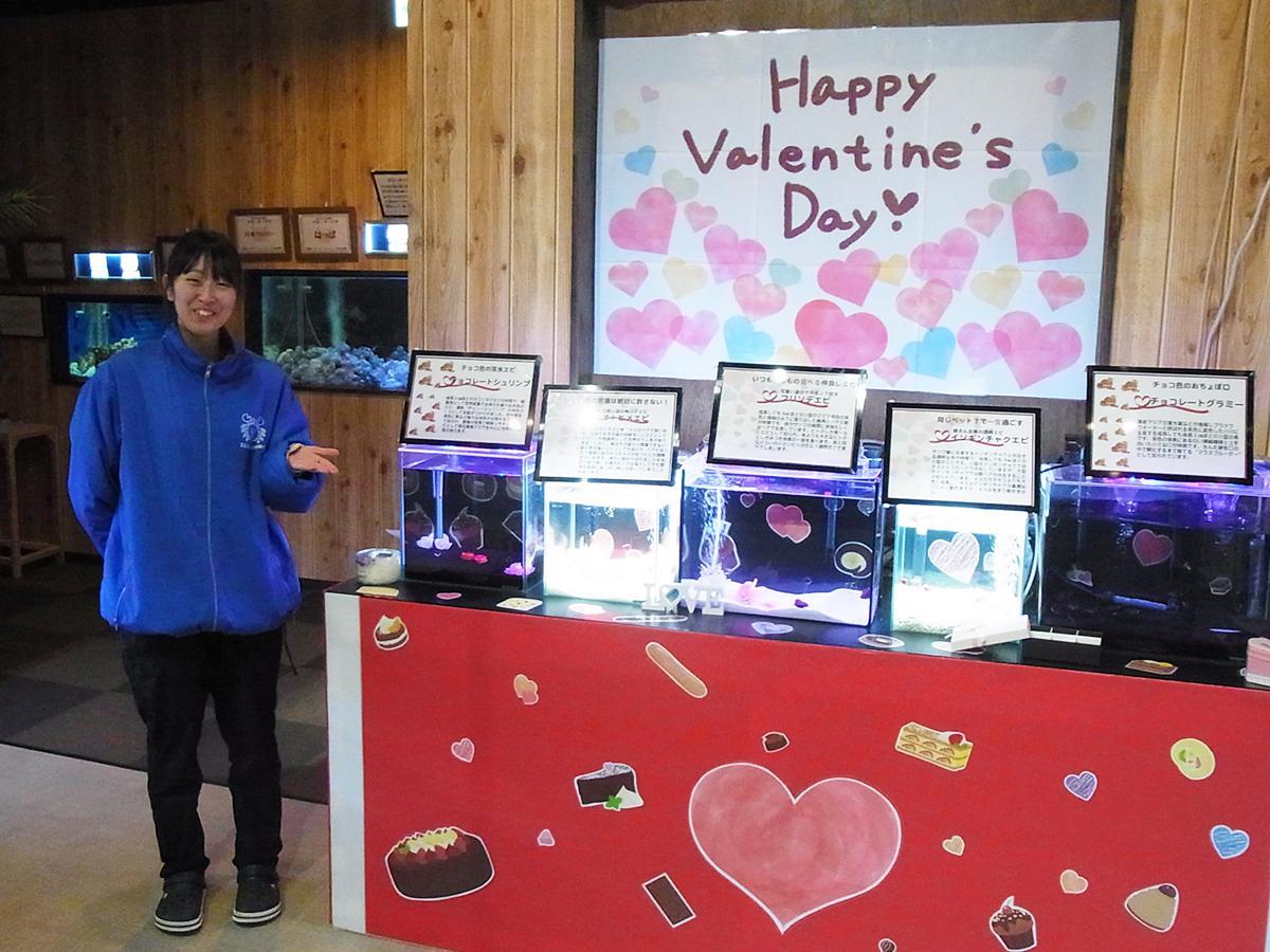 バレンタイン特別展示「自然界の恋愛も大変 チョコっと変わった小さないきものたち」を紹介する紺野さん