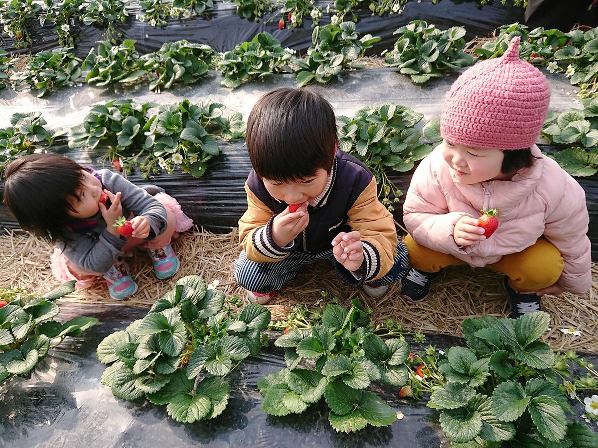 口いっぱいにイチゴを頬張る子どもたち