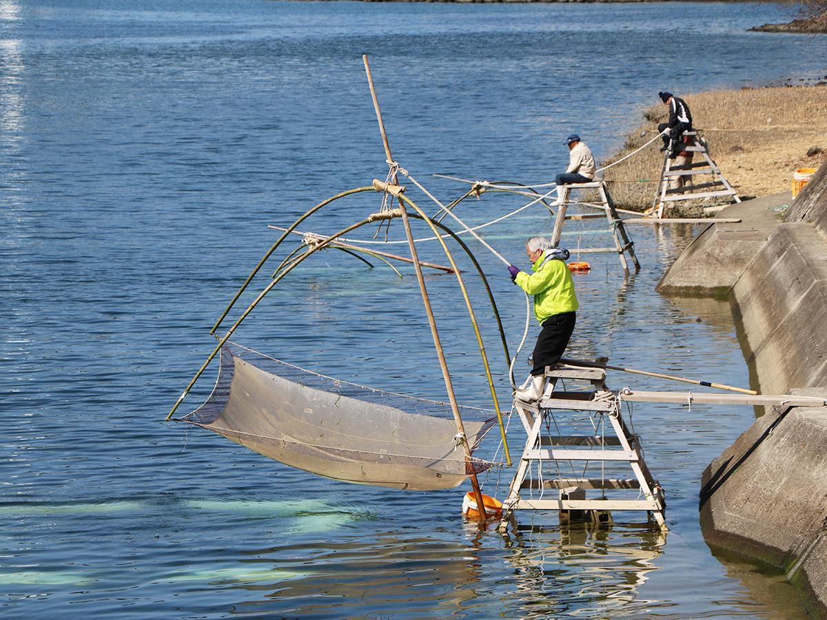 四つ手網を使ったシロウオ漁