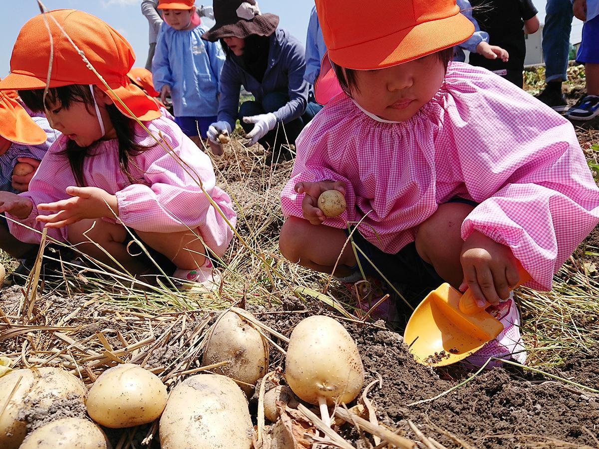「大きいイモが出てきた」とうれしそうに話す園児たち