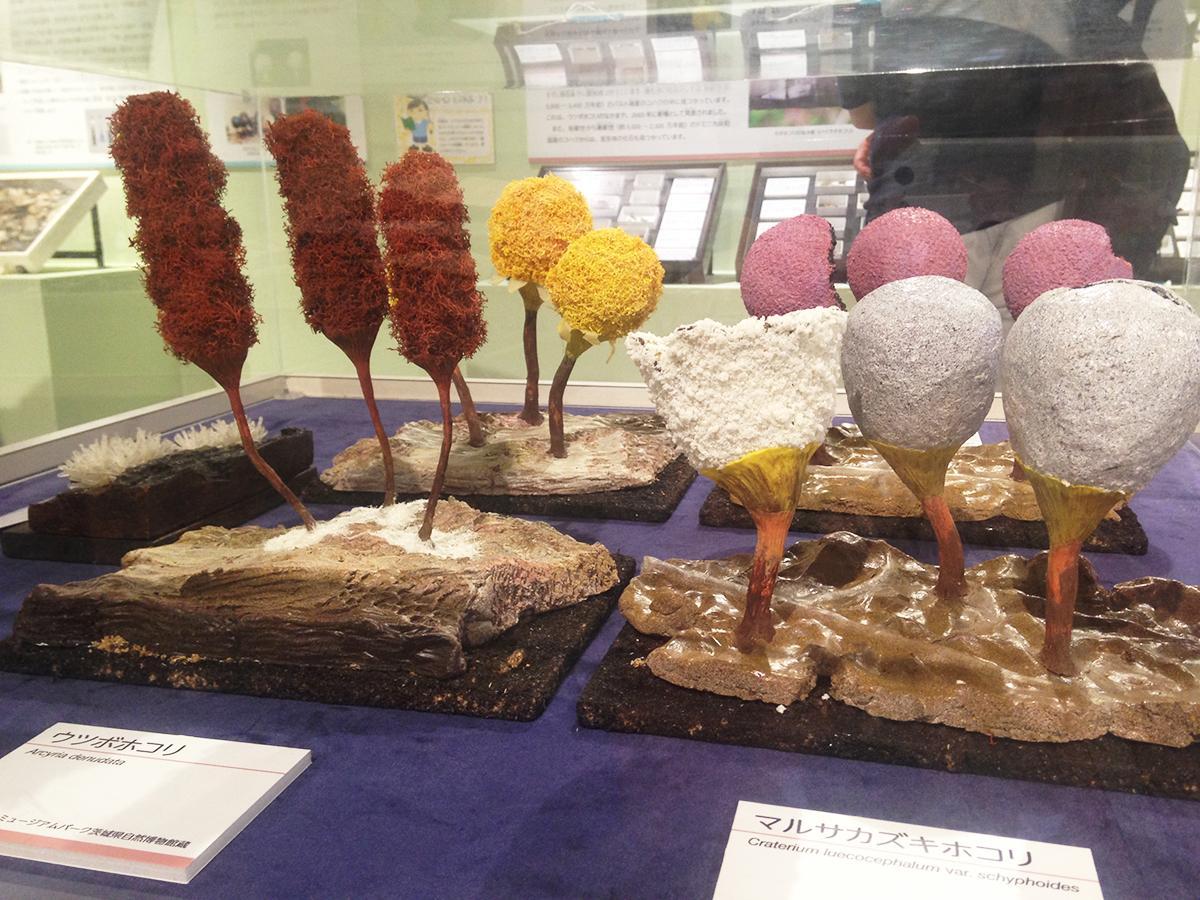 粘菌の拡大模型