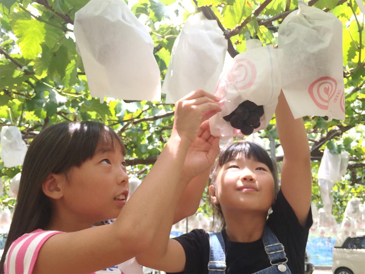 ブドウ狩りを楽しむ子どもたち
