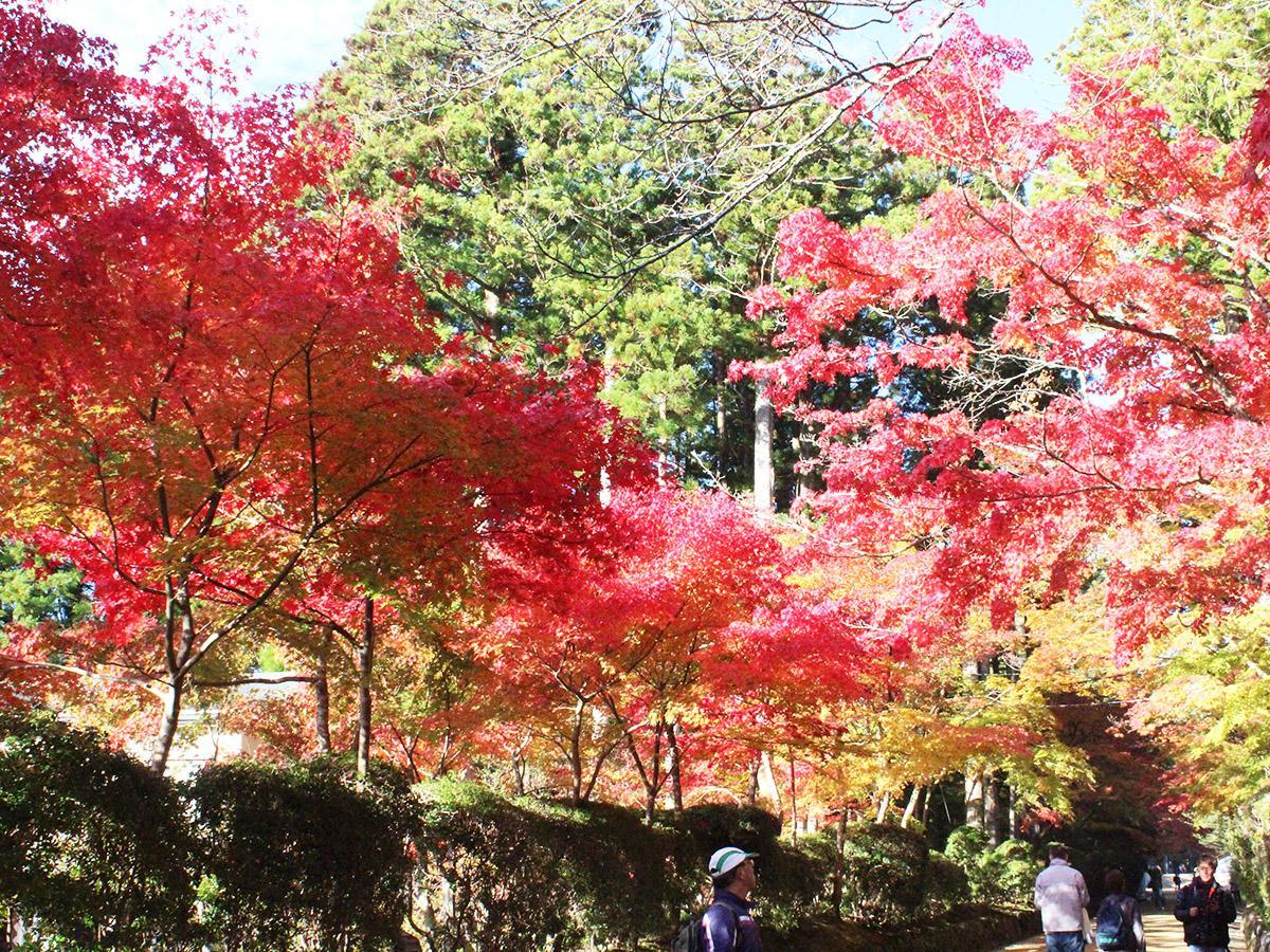 蛇腹路の紅葉(11月4日撮影)