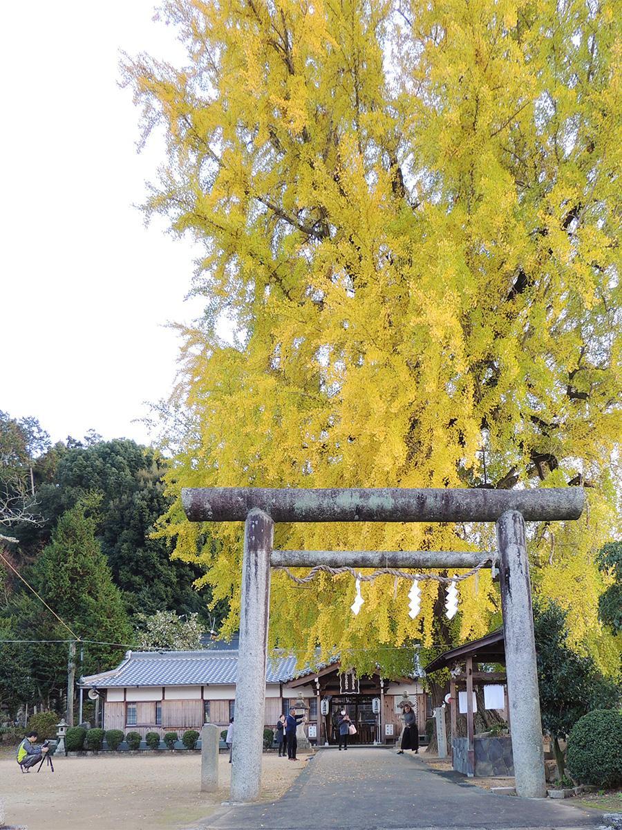 丹生酒殿神社の大イチョウ