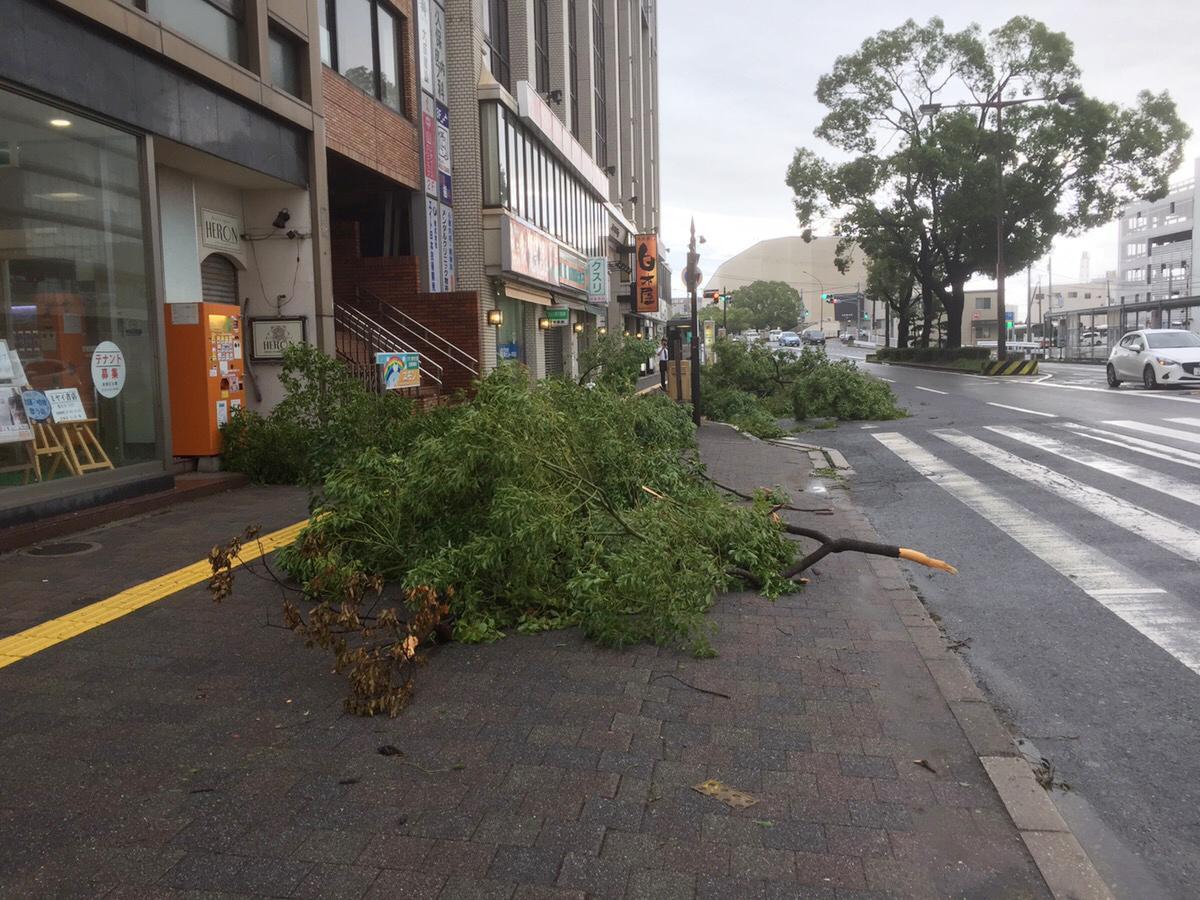 台風21号の影響で折れて風で飛ばされた街路樹(南海和歌山市駅前)