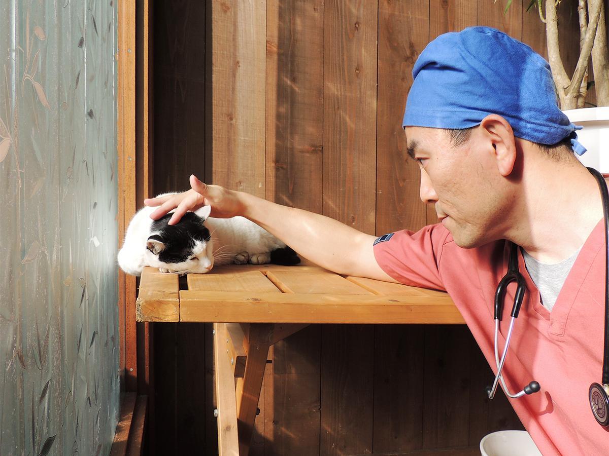 県内初のネコの不妊手術専門病院を開院する村上聡獣医師