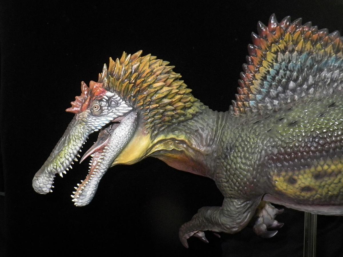 海洋堂が製作したスピノサウルス類の生体復元模型