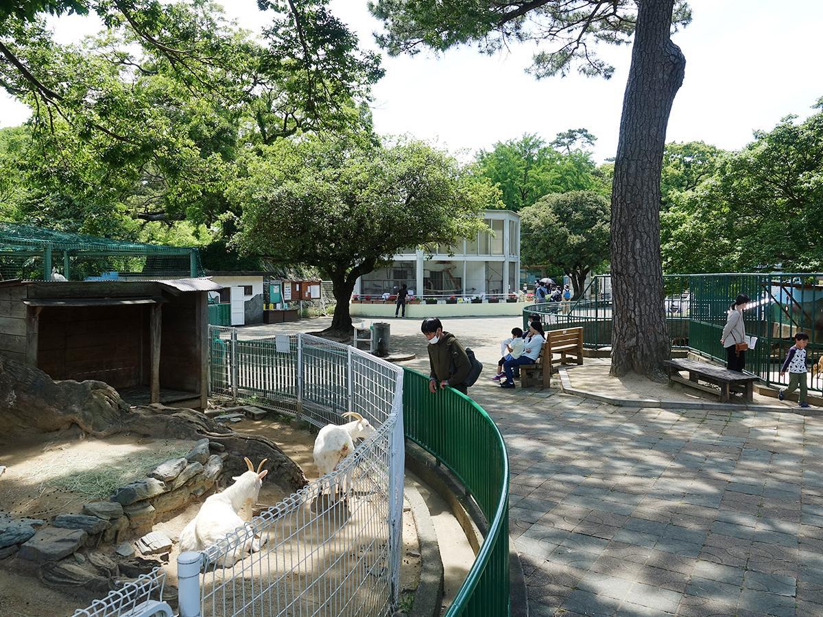 約1カ月ぶりに再開した動物園で思い思いに時間を過ごす来園者