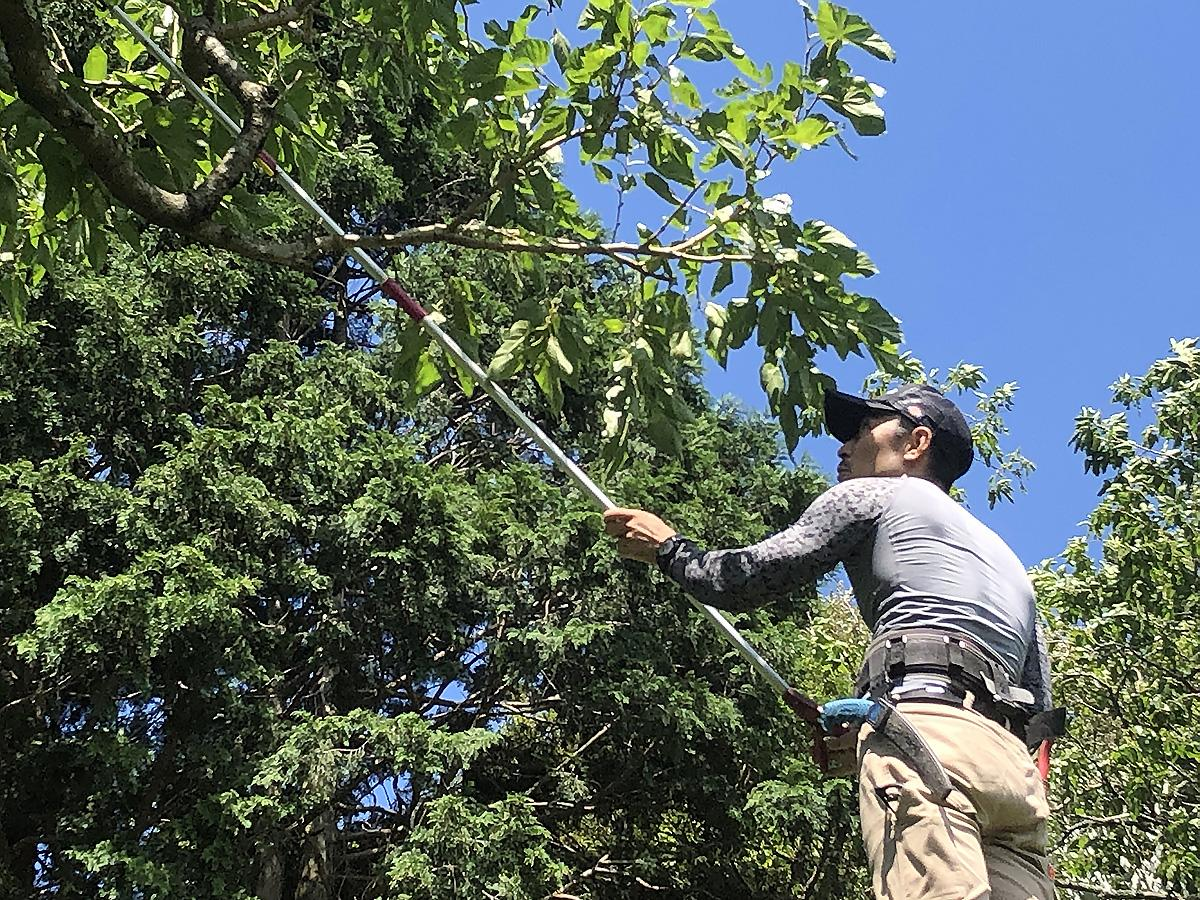 クワの葉を収穫する新田さん