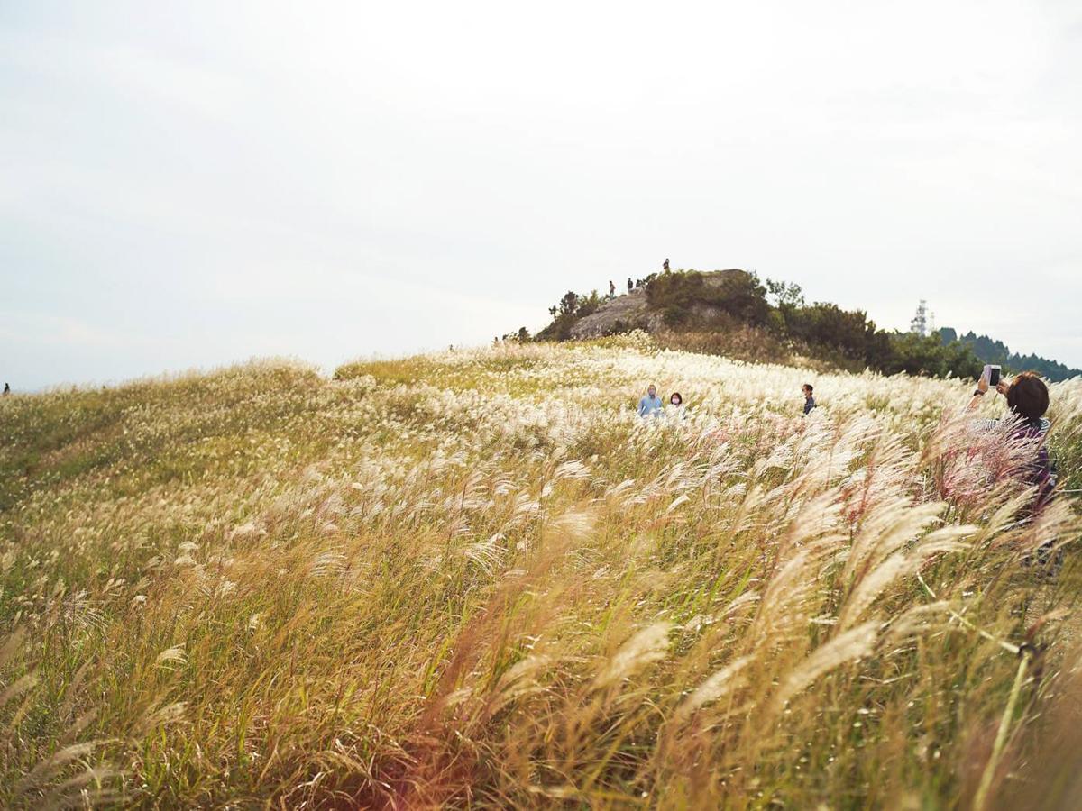 銀の穂をなびかせ一面に広がるススキ(10月3日撮影)
